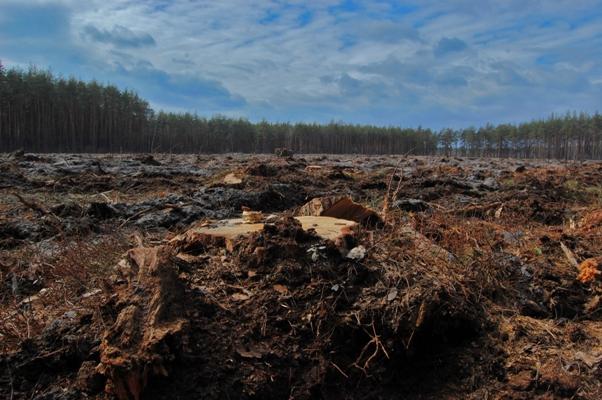 Рис.1.Рубка біля Пуща-Водиці. Незабаром так виглядатимуть тисячі гектарів лісу