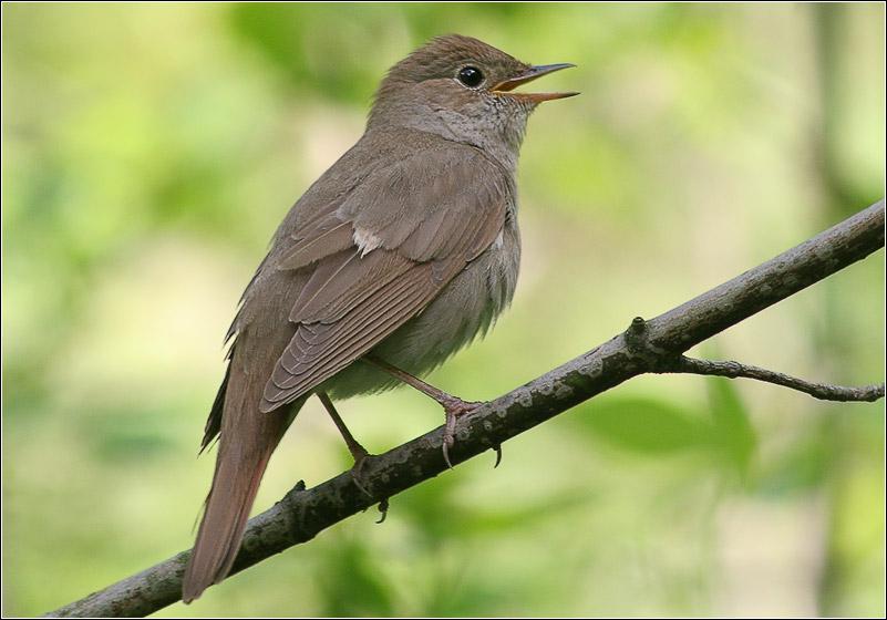 Птицы фото с названиями