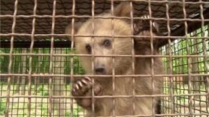 тортури клітка медведиця