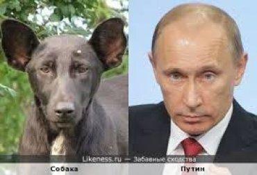 Собака Путіна