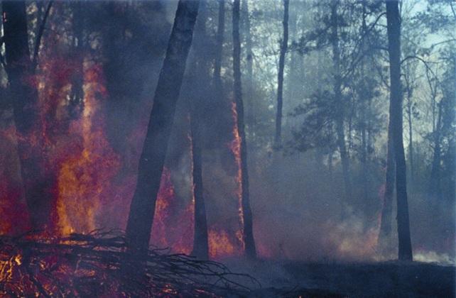 Пожежа в Поліському заповіднику