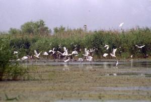Дунайський заповідник - рай для птахів чи для мисливців? (фото. О. Захаровой)